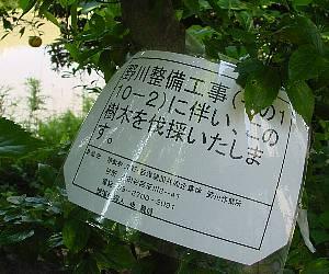 t2376.jpg