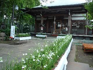 t4325妙法寺サギ草展