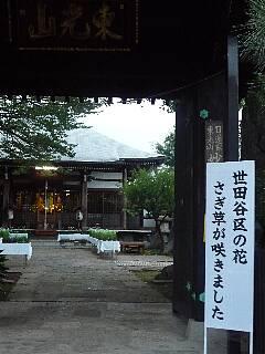 t4327世田谷区の花さぎ草